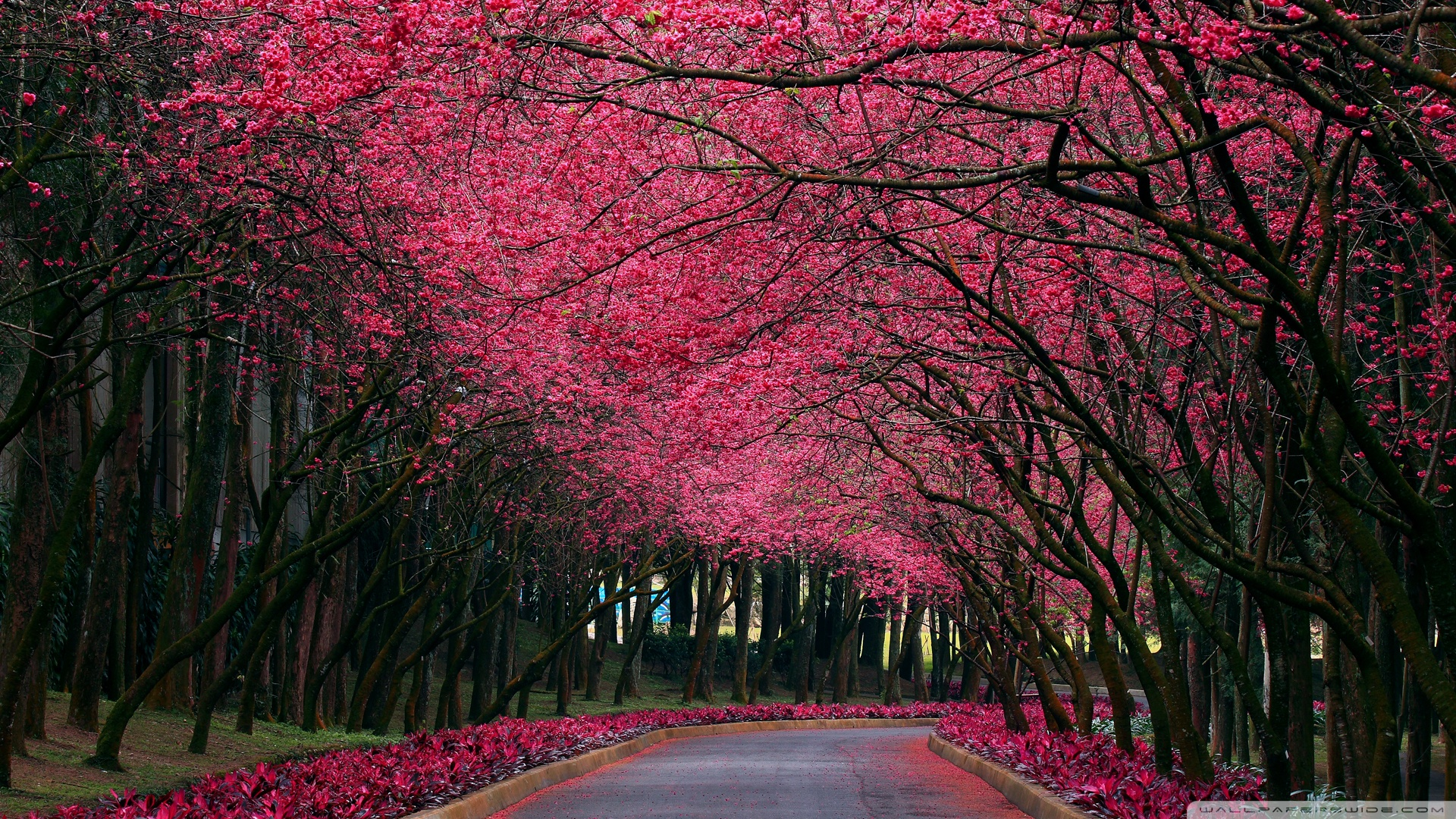 Blooming trees alley 49450