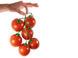Tomatoes Features 11898