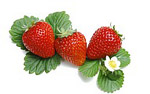 High-definition material Strawberry 1847