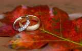 Wedding wedding ring 16084