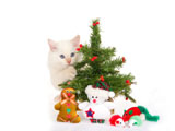 HD Cat Christmas 25345