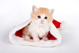 HD Cat Christmas 25376