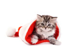 HD Cat Christmas 25405
