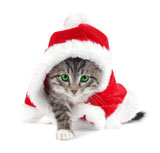 HD Cat Christmas 25420