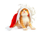 HD Cat Christmas 25435