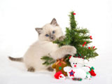 HD Cat Christmas 25450