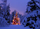 Christmas Wallpaper 6502