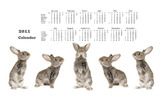 Calendar Year of the Rabbit 14314