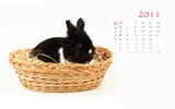 Calendar Year of the Rabbit 14653