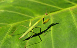 Widescreen insect photo material 1554