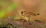 Widescreen insect photo material 3529