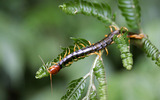 Widescreen insect photo material 4268