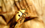 Widescreen insect photo material 4415