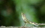 Widescreen insect photo material 4708