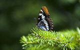 Widescreen insect photo material 4853