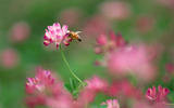 Widescreen insect photo material 4997