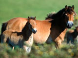 High Definition Wallpapers Horse pictures 1037