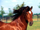 High Definition Wallpapers Horse pictures 2731