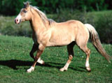 High Definition Wallpapers Horse pictures 3055