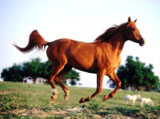 High Definition Wallpapers Horse pictures 3217