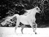 High Definition Wallpapers Horse pictures 3975