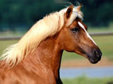 High Definition Wallpapers Horse pictures 4416