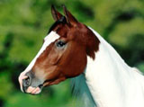 High Definition Wallpapers Horse pictures 4563
