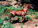 High Definition Wallpapers Horse pictures 5425