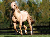 High Definition Wallpapers Horse pictures 5567