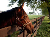 High Definition Wallpapers Horse pictures 5850