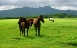 Grass and horse HD 6652