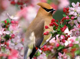 High-resolution pictures of birds 1038
