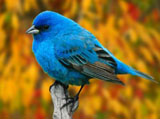 High-resolution pictures of birds 1384