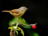 Cute bird wallpaper 18332