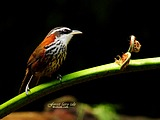 Cute bird wallpaper 18381