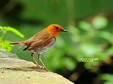 Cute bird wallpaper 18430