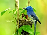 Cute bird wallpaper 18673