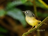 Cute bird wallpaper 18721
