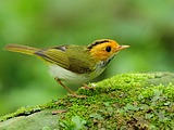 Cute bird wallpaper 19009