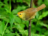 Cute bird wallpaper 19249