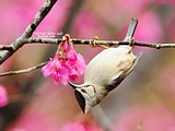 Cute bird wallpaper 19297