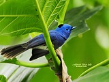 Cute bird wallpaper 19345