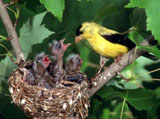 High-resolution pictures of birds 2732