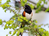 High-resolution pictures of birds 3056