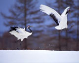 High-resolution pictures of birds 3828