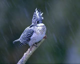 High-resolution pictures of birds 4855