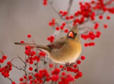 High-resolution pictures of birds 514