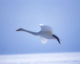High-resolution pictures of birds 6653