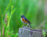 High-resolution pictures of birds 7851