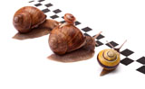 High-definition picture snail 14325